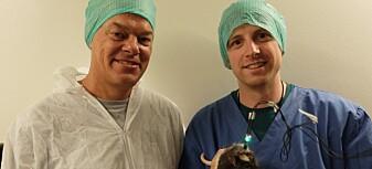 Nytt gjennombrudd på Moser-laben: Slik holder hjernen orden på tiden