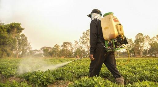 Ny oppdagelse kan gjøre humler og bier immune mot sprøytemidler