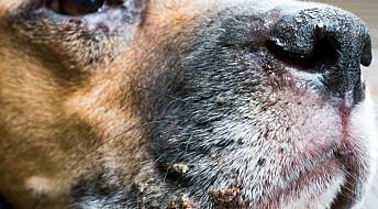 Bakgrunn: Aldri helt trygt å importere hund fra utlandet