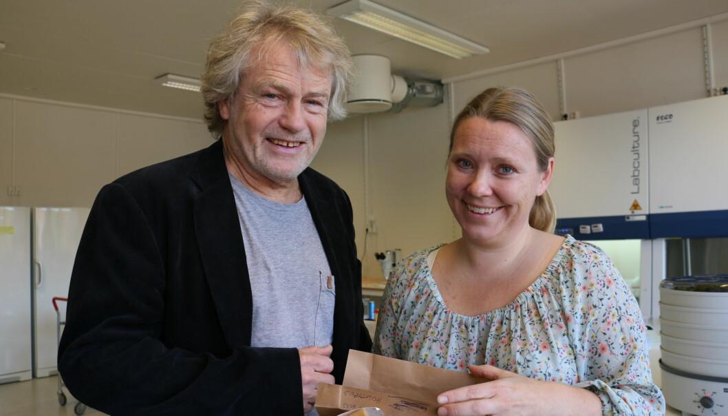 38 arter ble til 55 da Trond Schumacher og Inger Skrede begynte å rydde i slekten til soppen Helvella. En helt ukjent dukket også opp. (Foto: Titan)