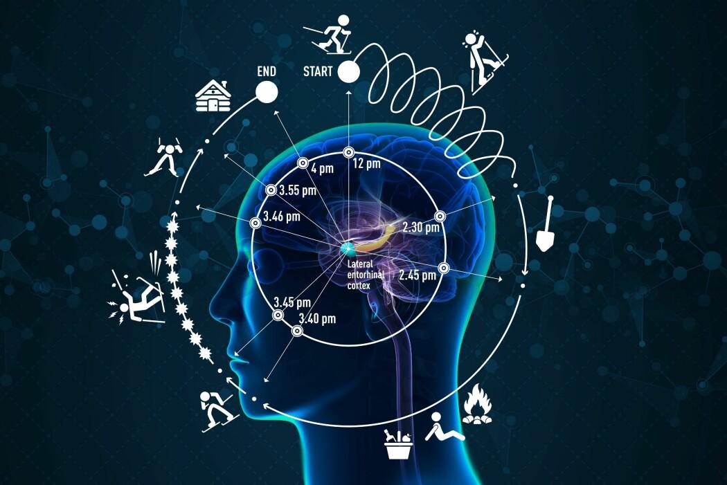 Slik ser Moser-laben for seg den episodiske tiden under en fire timer lang skitur. Turen går opp og ned et brattfjell og inkluderer hendelser som endrer skiløperens oppfatning av tid. Tidsforståelsen er avhengig av hendelser og begivenheter og kan oppfattes som både hurtigere og langsommere enn klokketiden. Den grønne klumpen i midten illustrerer <i>lateral entorhinal cortex</i>. Den gule pølsa er hukommelsessentralen <i>hippocampus</i>. (Ilustrasjon: Kolbjørn Skarpnes og Rita Elmkvist Nilsen, NTNU og Kavli Institute for Systems Neuroscience)