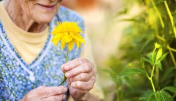 Hvis nedsatt luktesans varsler begynnende demens, kan luktetester bli en av metodene for å oppdage sykdommen tidligere.  (Foto: Halfpoint / Shutterstock / NTB scanpix)