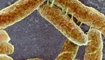 – Å redusere bruken av antibiotika er ikke nok for å bli kvitt resistens