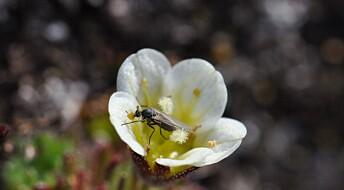 Kronikk: Vi må vite mer om insektene