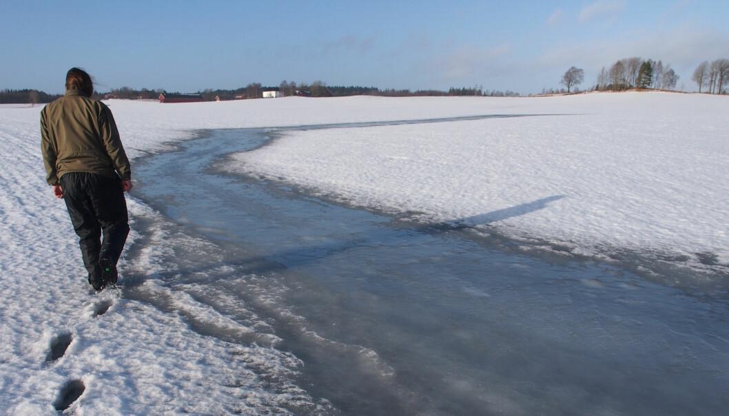 Snø kan ha en isolerende effekt for jorden hvis bare snødekket er tykt nok. Uten snø kan vinterens kalde temperaturer skape problemer. (Foto: Torsten Starkloff)