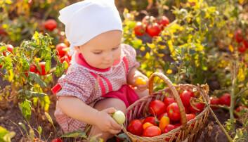 FAO anslår at vi må produsere 50 prosent mer mat i 2050 hvis det skal være nok til fremtidige generasjonene.  (Foto: OlgaPonomarenko / Shutterstock / NTB scanpix)
