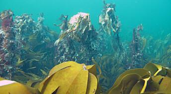 NIVA skal hjelpe til med å restaurere naturen i havet