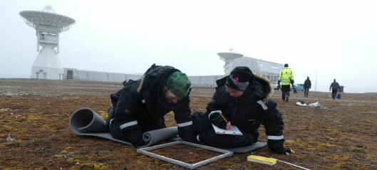 På jakt etter kvasarer, stjernestøv og småplanter på Svalbard