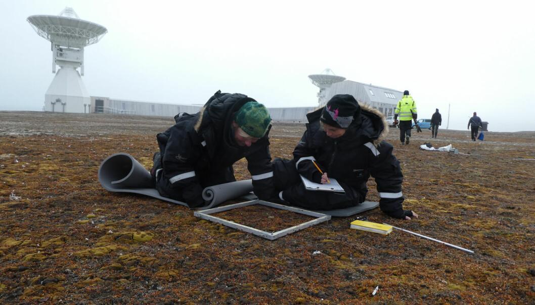 Kartverkets nye jordobservatorium i Ny-Ålesund mottar signaler fra kvasarer milliarder av lysår ute i verdensrommet. Da Kartverket fikk tillatelse til å bygge, måtte de ta spesielle hensyn til sårbar natur og legge til rette for at vegetasjon skal etablere seg på nytt rundt anlegget. Vi undersøker om disse tiltakene har fungert. (Foto: Kartverket)
