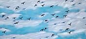 Endringer i algeoppblomstring kan gi færre sjøfugler