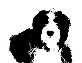 Hun om hund -av Emma Mary Garlant