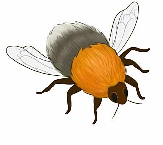 Insektøkologene