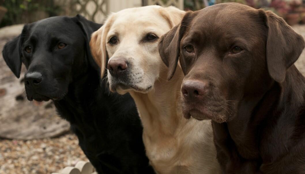 Kan hunder virkelig sanse om mennesker er slemme? (Illustrasjonsbilde: claire norman, Shutterstock, NTB scanpix)