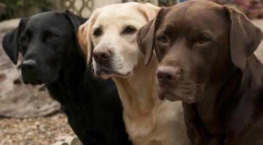 Nei, studien viser ikke at hunder kan gjenkjenne onde mennesker