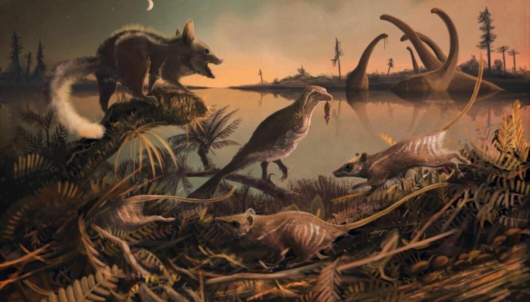 Her er en rekonstruksjon av de små rotteaktige pattedyrene som levde for 145 millioner år siden. (Illustrasjon: Dr Mark Witton, University of Portsmouth)