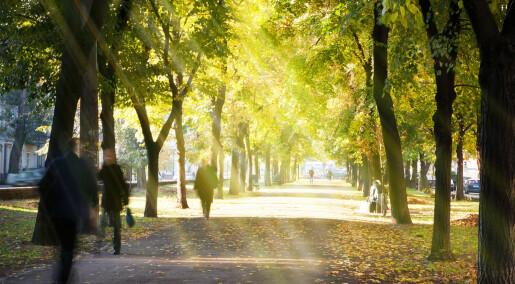 Trær i byen vokser raskere