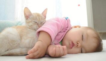 Katt i hjemmet påvirker genene våre – beskytter nyfødte barn mot astma