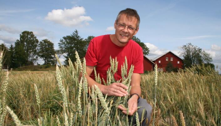 Planteforsker Morten Lillemo en av forsøksfeltene på NMBU hvor hvete i fremtiden også vil bli testet for tørketoleranse. (Foto: Janne Karin Brodin)