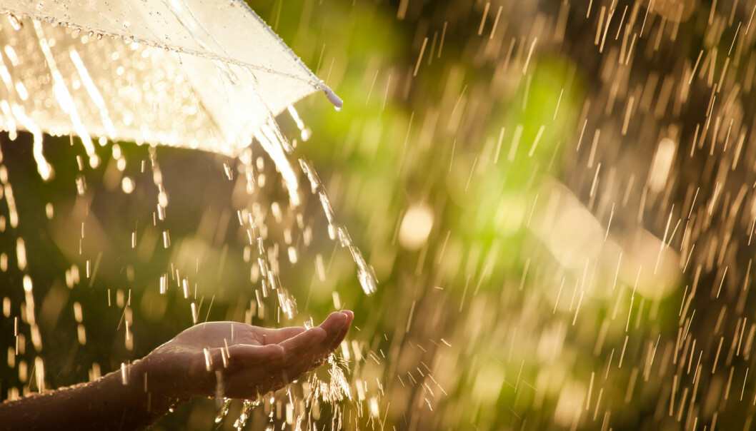 Regndråper blir sjelden større enn en halv centimeter. Større dråper ødelegges av luftmotstanden.  (Foto: A3pfamily / Shutterstock / NTB scanpix)
