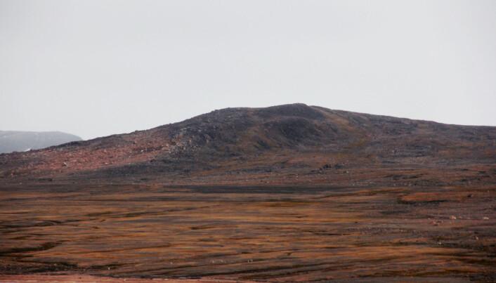 Reinsflokk på land – kan de sjå dei? (Foto: Lilja R. Bjarnadóttir, NGU)