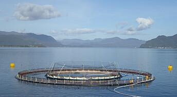 Forskeren forteller: Ny teknologi vil gjøre norsk fiskeoppdrett mer bærekraftig