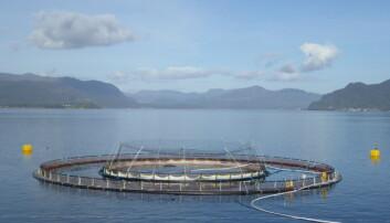 Snorkelmerder er en av de nye, teknologiske løsningene som er utviklet for å få bukt med luseproblemene i oppdrettsnæringen. Bildet er fra et oppdrettsanlegg i Låva i Rogaland. (Foto: Frode Oppedal / Havforskningsinstituttet)