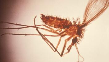 Denne flua sprer livsfarlig sykdom i Brasil