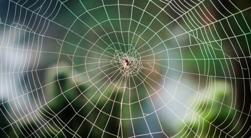Spør en forsker: Hvordan lager edderkoppen nettet sitt?