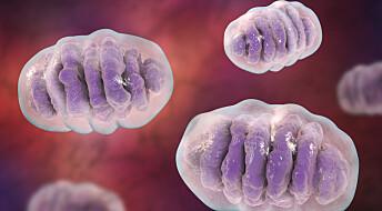 Energimotoren i cellene våre stammer fra bakterier