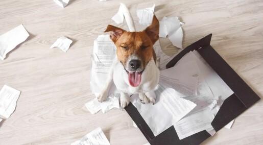 «Hunden min spiste opp dataene»