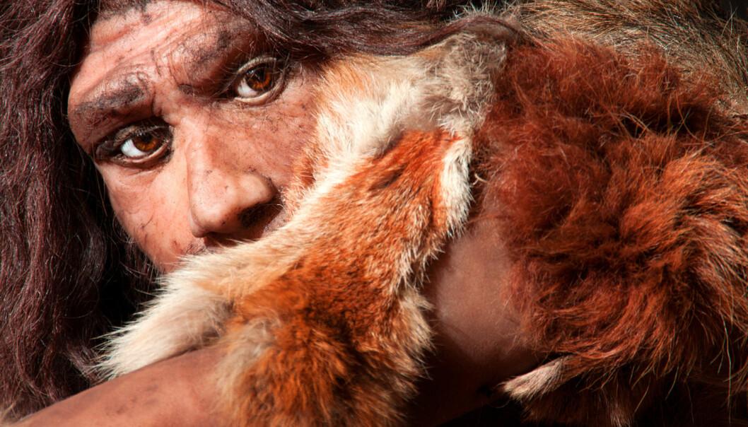 Rekonstruksjon av en neandertaler. (Foto: Shutterstock/NTB Scanpix)