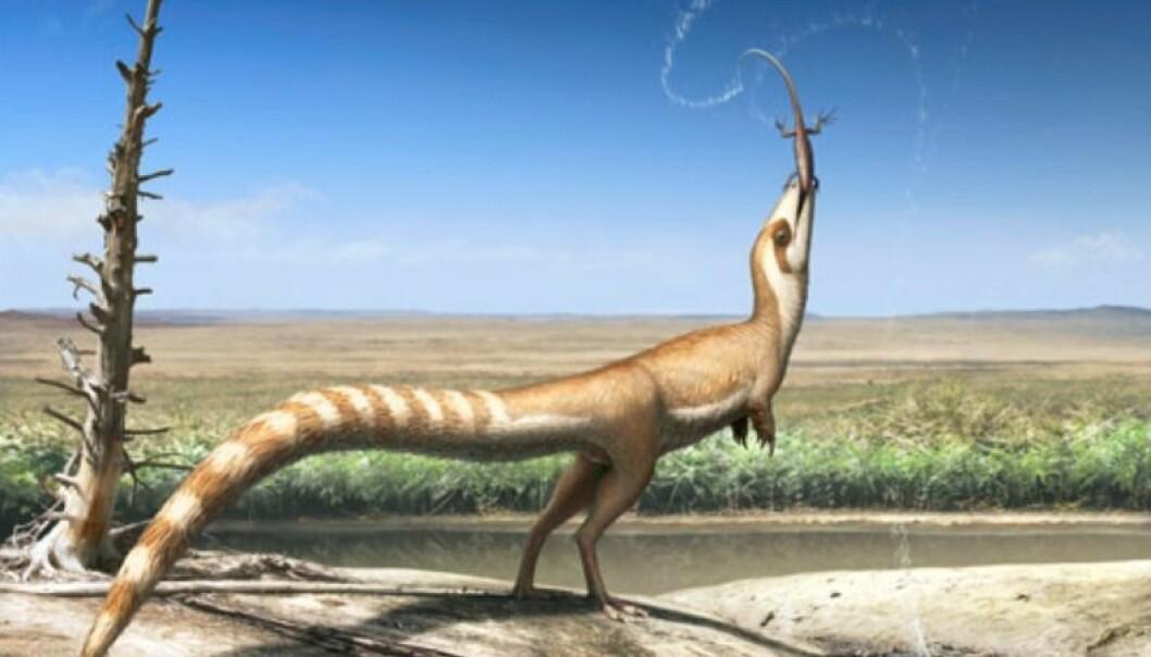 Sinosauropteryx i et åpent, liknende landskap som den antakelig levde i for 130 millioner år siden.  (Illustrasjon: Robert Nicholls)