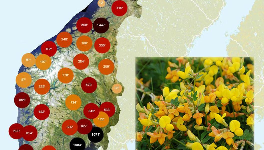 Artskart viser hvor arter er funnet. (Skjermbilde fra Artskart 2.0: Artsdatabanken. Innfelt foto av tiriltunge: Bolette Bele, NIBIO Norsk institutt for bioøkonomi. Lisens CC BY 3.0)