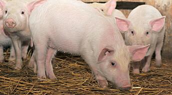 Tåler husdyr mat laget av trær og tare?