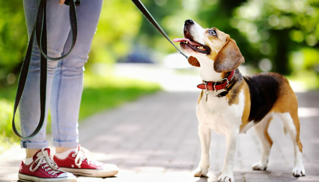 Hunder følger med på hvor mennesker retter oppmerksomheten. Foto: Maria Sbytova / Shutterstock / NTB scanpix
