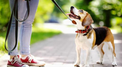 Hunder har flere ansiktsuttrykk når vi ser på