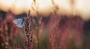 Vi vet for lite om hvilke insekter som forsvinner