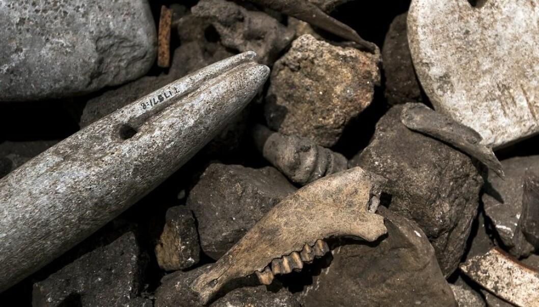 Hver gang en glødende varm bryggestein ble droppet ned i en glovarm væske, sprakk de. Etterhvert ble de for små og ble kastet på en søppelhaug. De tykke lagene med stein arkeologene finner inneholder også andre gjenstander, som gamle spinnehjul og vevlodd, dyreknokler og perler.  (Foto: Åge Hojem, NTNU VItenskapsmuseet)