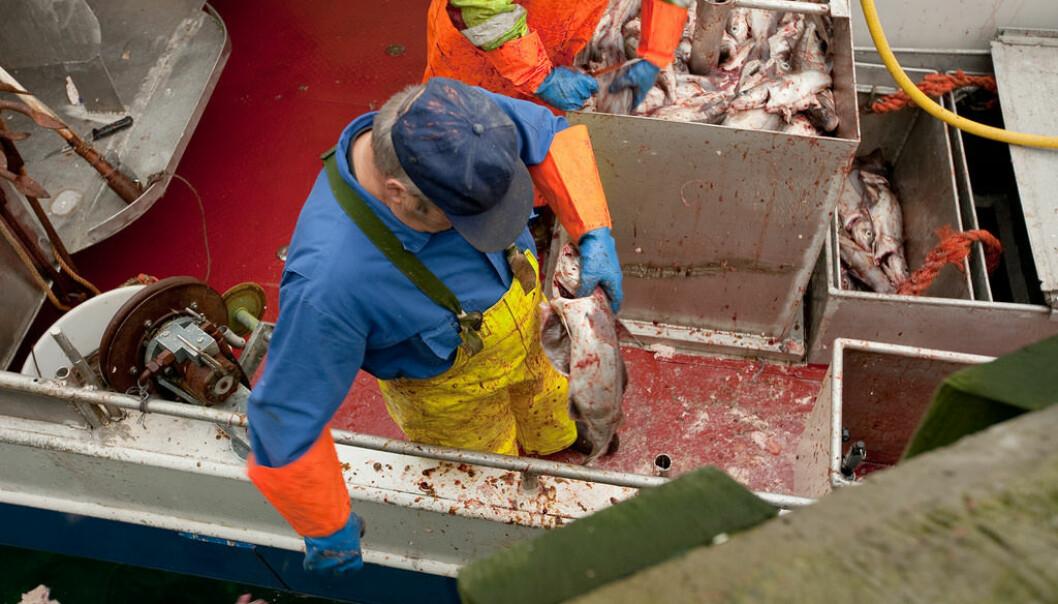 Det meste av norsk sjømat er nå uten tilsatt antibiotika. Importert sjømat holder dessverre ikke samme standard. (Foto: Lawrence Hislop / Grida)