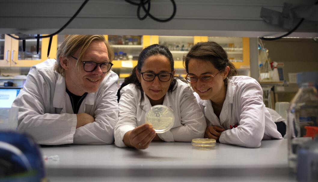 Forskerkollegene Pål Jarle Johnsen, Elizabeth Aarag Fredheim og Julia Maria Kloos ved UiT Norges arktiske universitet ser nye muligheter i antibiotikabehandlingen. (Foto: Mathias Bruvoll, UiT)