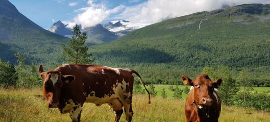 Nok mat til dyra trass fôrmangel
