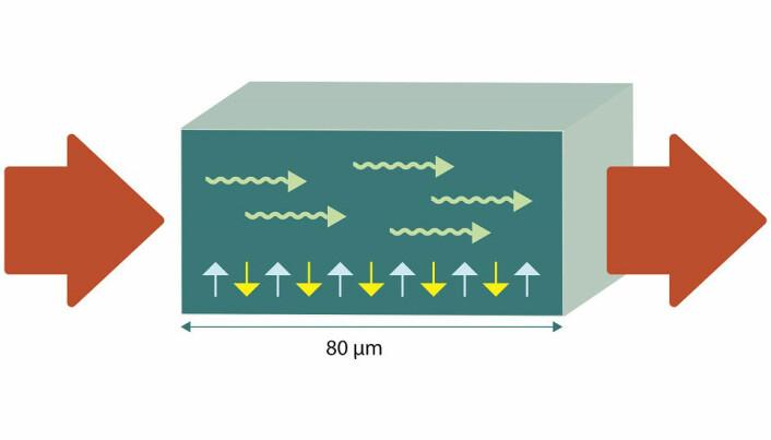 Spinnstrømmen settes i gang med et elektrisk felt i den ene enden av materialet, en antiferromagnet. I antiferromagneten er det spinn som veksler mellom den ene eller den andre retningen (gule og blå piler). Signalet sprer seg som en bølge (grønne piler) gjennom antiferromagneten. I den andre enden av materialet overføres spinnstrømmen til en elektrisk strøm igjen. (Illustrasjon: Kolbjørn Skarpnes, NTNU)