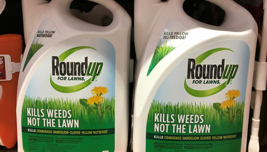 Monsanto var først ute med å produsere ugressmidler med glyfosat, under merkenavnet RoundUp. Etter at patentet gikk ut har også andre produsenter kommet med sine glyfosat-produkter.  (Foto: REUTERS/Mike Blake)