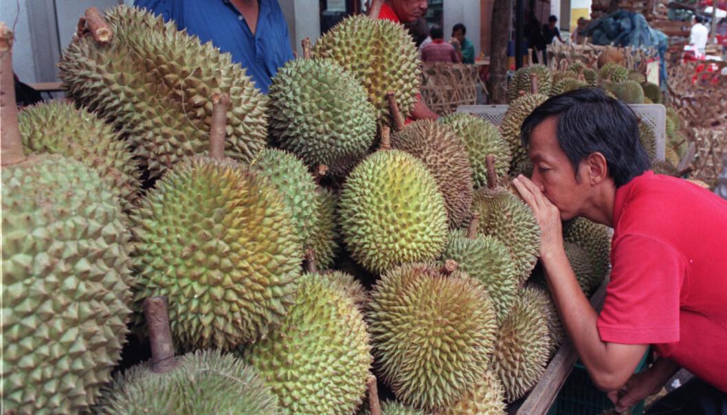 En mann i Singapore drar inn durian-lukt. (Illustrasjonfoto: NTB Scanpix/REUTERS/Simon Thong)