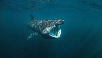 Ni ting du ikke visste om haien