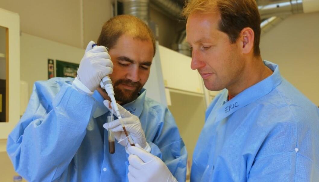 Pål Trosvik og Eric de Muinck forsker på bakteriene i tarmen. De oppdaget nylig at disse bakteriene ikke nødvendigvis bare lever i harmoni – tidvis er det full krig mellom dem.  (Foto: UiO)