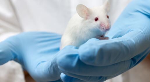 Gjorde mus mindre avhengig av kokain med genmanipulering