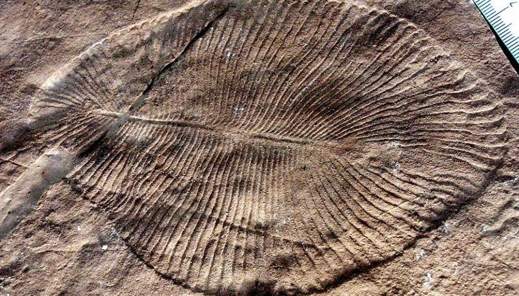 Er dette planetens eldste dyr?
