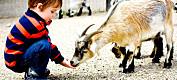 Gir kurs i korleis kontakt med dyr kan brukast helsefremjande