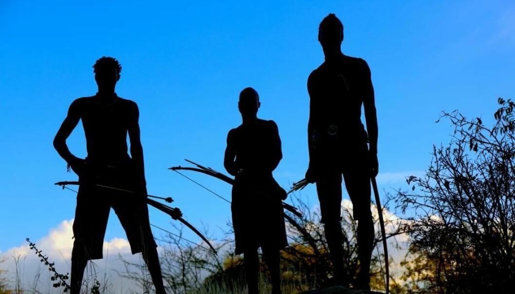 Om lag 200 medlemmer av det afrikanske hadzafolket lever som jegere og sankere på fulltid. Ny forskning tyder på at det gir dem en helt unik, mangfoldig og sunn sammensetning av tarmbakterier.  (Foto: Human Food Project, Jeff Leach)